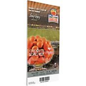 That's My Ticket Stanford Cardinal 2011 Orange Bowl Canvas Mega Ticket